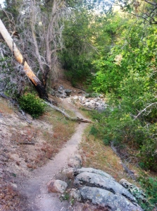 The Beckoning Trail
