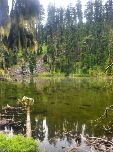 The swamps of Oregon.